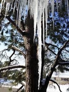 ice hanging from the tree