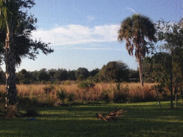 yard view 5