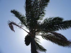 palms blowing