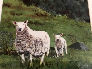 sheep in pasture by Jane Jordan